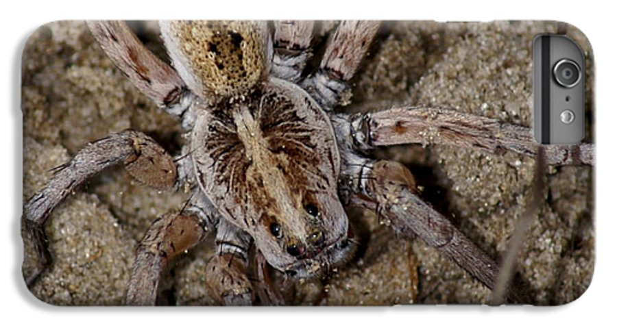 Spider IPhone 7 Plus Case featuring the photograph Charlotte by Debbie May