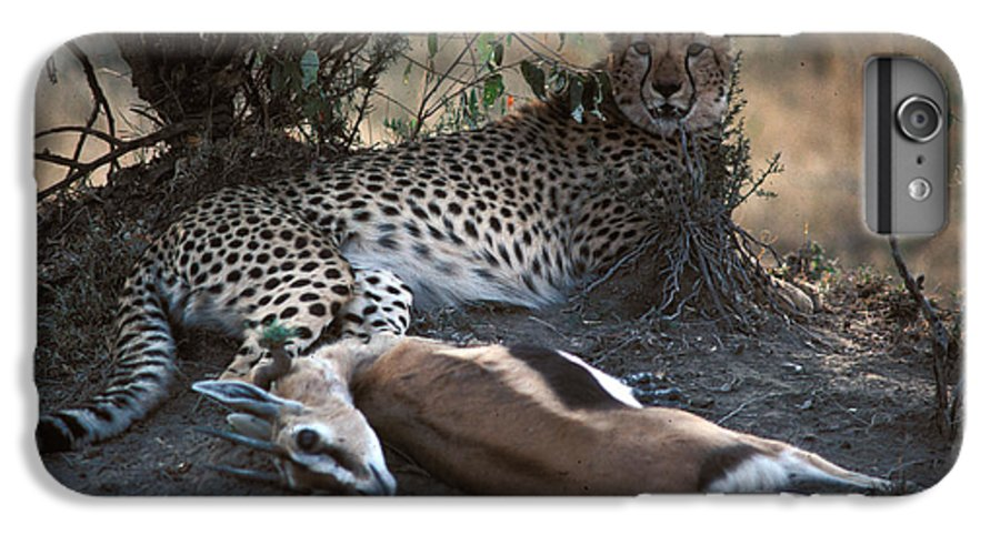 Spots IPhone 7 Plus Case featuring the photograph Cheetah With Kill by Carl Purcell