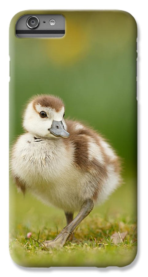 Gosling IPhone 7 Plus Case featuring the photograph Cute Gosling by Roeselien Raimond