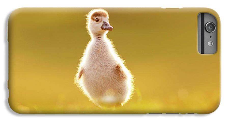 Bird IPhone 7 Plus Case featuring the photograph Cute Overload - Baby Gosling by Roeselien Raimond