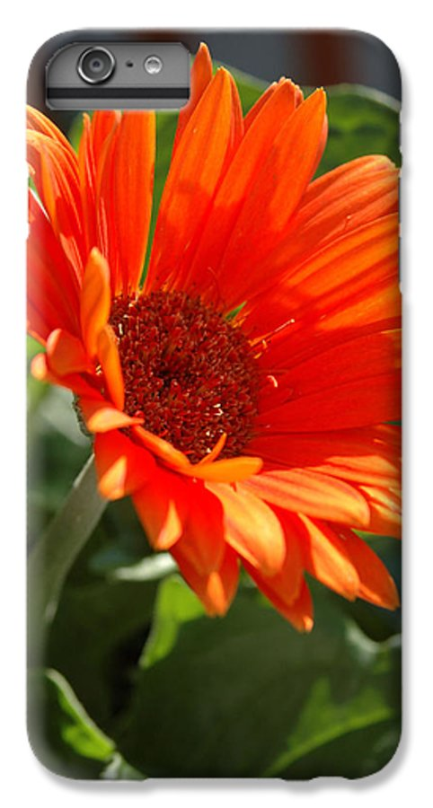 Daisy IPhone 7 Plus Case featuring the photograph Daisy by Kathy Schumann