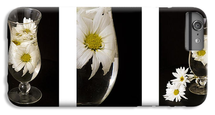 Flowers IPhone 7 Plus Case featuring the photograph Daisy Triptych by Ayesha Lakes