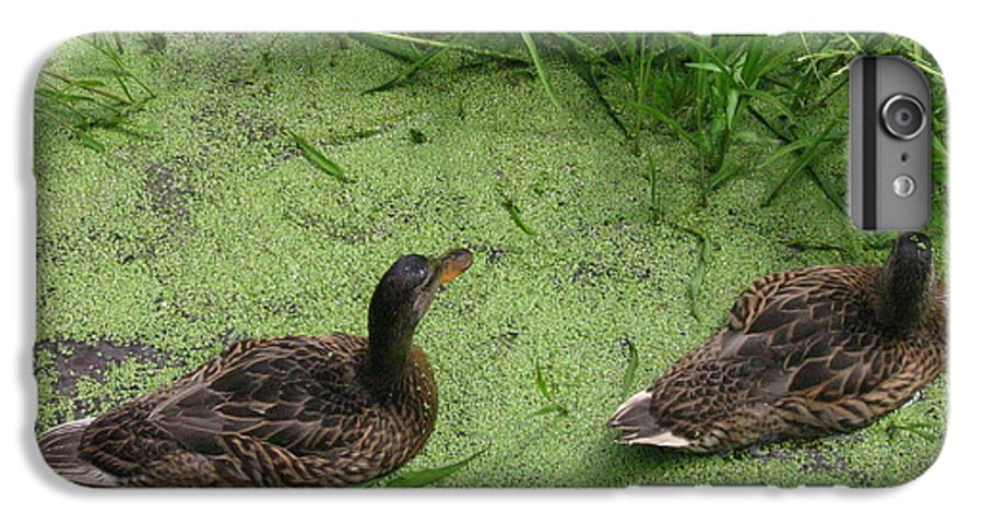 Duck IPhone 7 Plus Case featuring the photograph Ducks In Pond by Melissa Parks