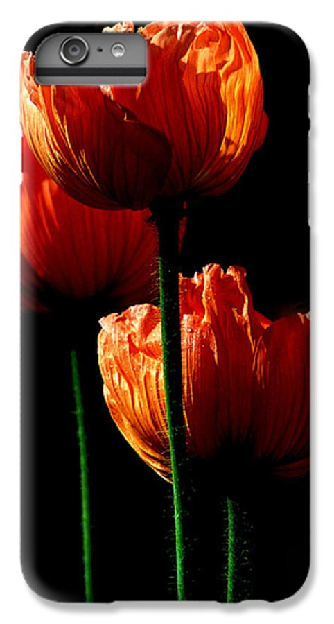 Photograph IPhone 7 Plus Case featuring the photograph Elegance by Stephie Butler