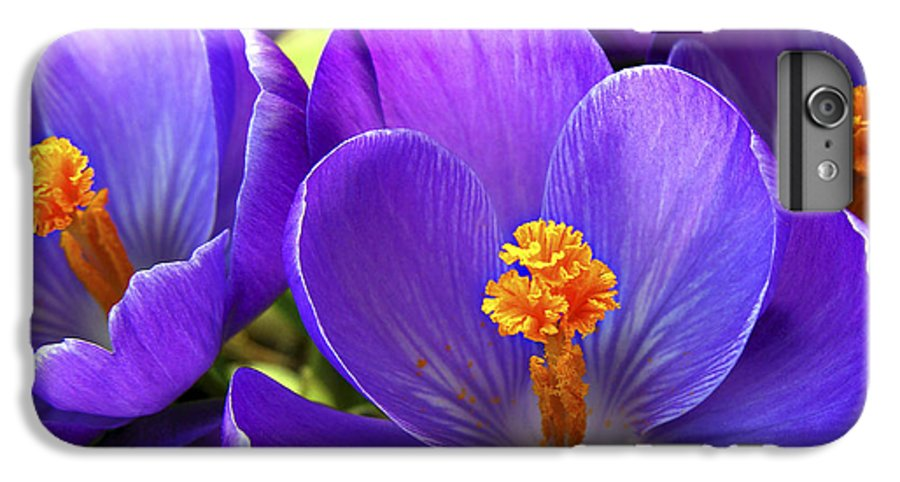 Flower IPhone 7 Plus Case featuring the photograph First Crocus by Marilyn Hunt