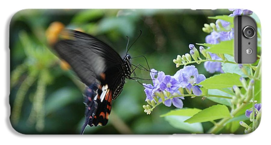 Butterfly IPhone 7 Plus Case featuring the photograph Fly In Butterfly by Shelley Jones
