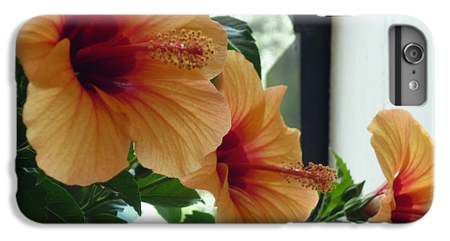 Photography Flower Floral Bloom Hibiscus Peach IPhone 7 Plus Case featuring the photograph Friends For A Day by Karin Dawn Kelshall- Best