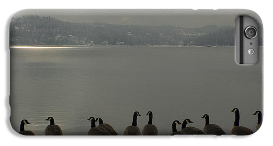 Geese IPhone 7 Plus Case featuring the photograph Geese On The Edge by Idaho Scenic Images Linda Lantzy