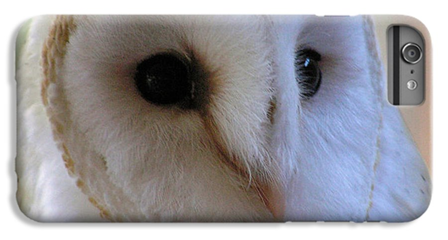 Barn IPhone 7 Plus Case featuring the photograph George by Louise Magno