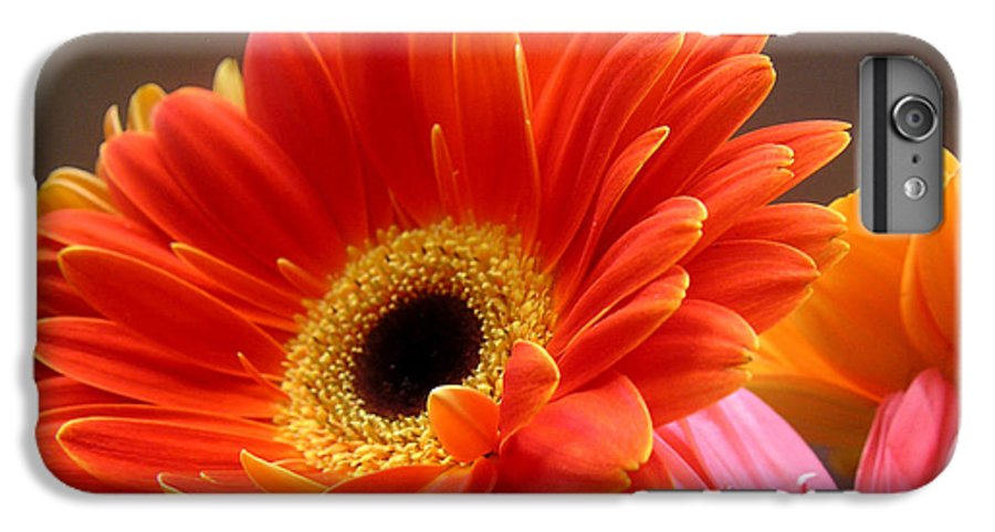 Nature IPhone 7 Plus Case featuring the photograph Gerbera Daisies - Luminous by Lucyna A M Green