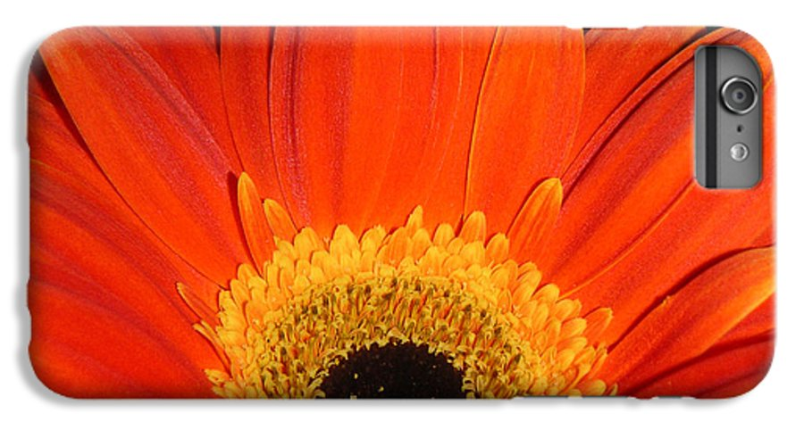 Nature IPhone 7 Plus Case featuring the photograph Gerbera Daisy - Glowing In The Dark by Lucyna A M Green