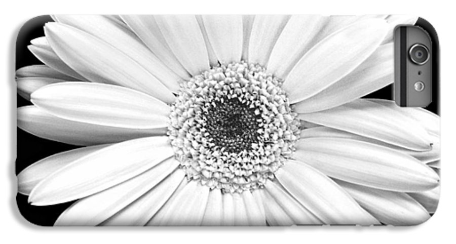 Gerber IPhone 7 Plus Case featuring the photograph Single Gerbera Daisy by Marilyn Hunt