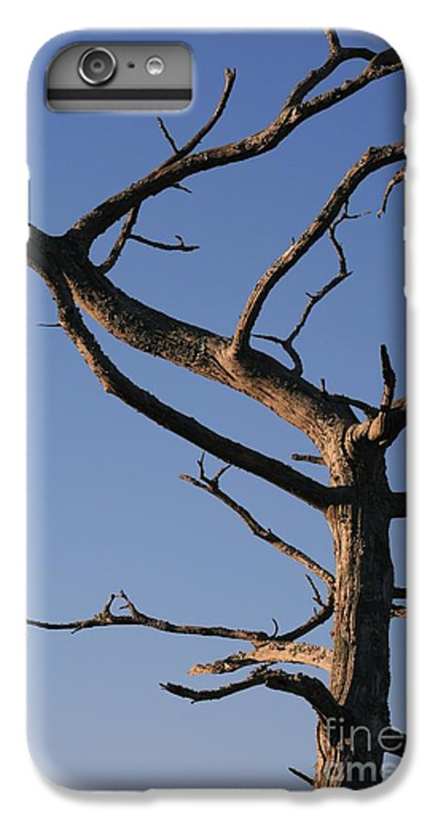 Tree IPhone 7 Plus Case featuring the photograph Gnarly Tree by Nadine Rippelmeyer