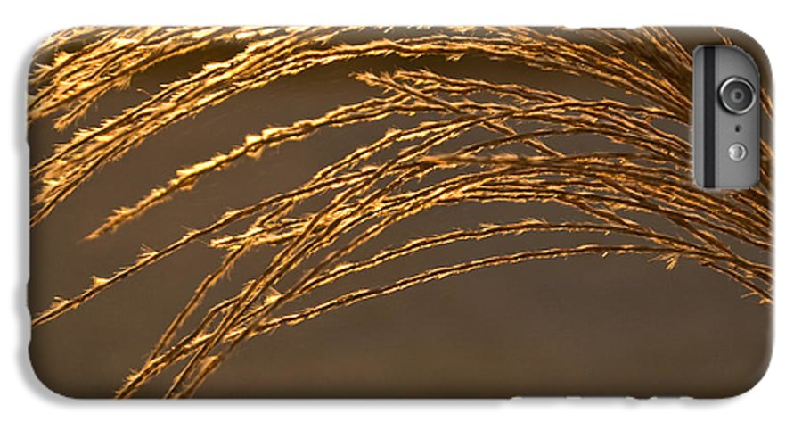 Grass IPhone 7 Plus Case featuring the photograph Golden Grass by Douglas Barnett
