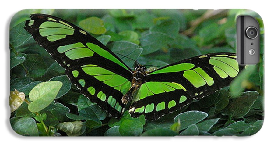 Green IPhone 7 Plus Case featuring the photograph Green Butterfly by Louise Magno