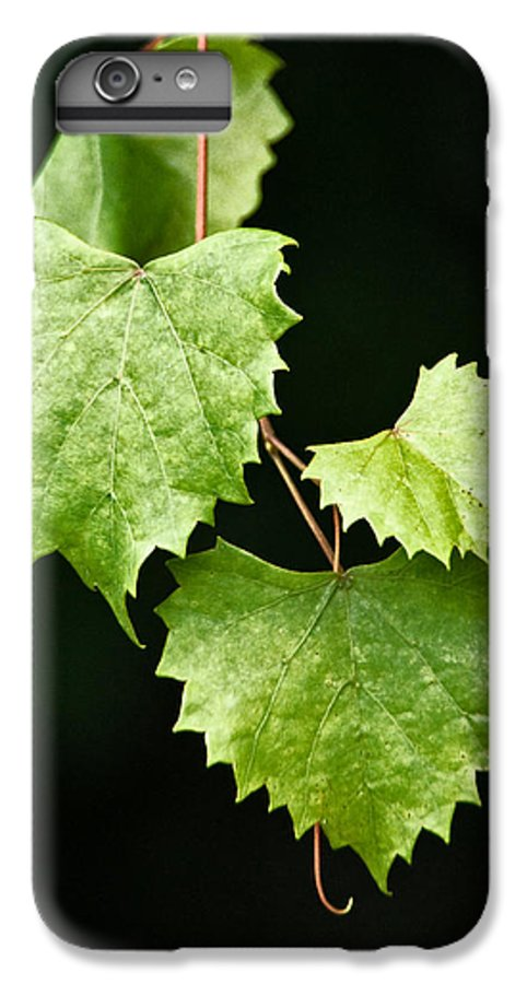 Flora IPhone 7 Plus Case featuring the photograph Green Leaves by Christopher Holmes