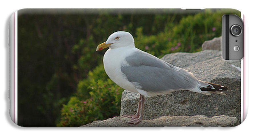 Landscape IPhone 7 Plus Case featuring the photograph Gull Able by Peter Muzyka