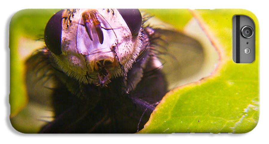 Fly IPhone 7 Plus Case featuring the photograph Hi There by Douglas Barnett