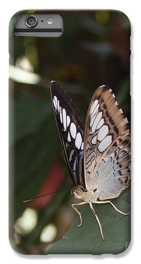 Butterfly IPhone 7 Plus Case featuring the photograph Hints Of Blue by Shelley Jones