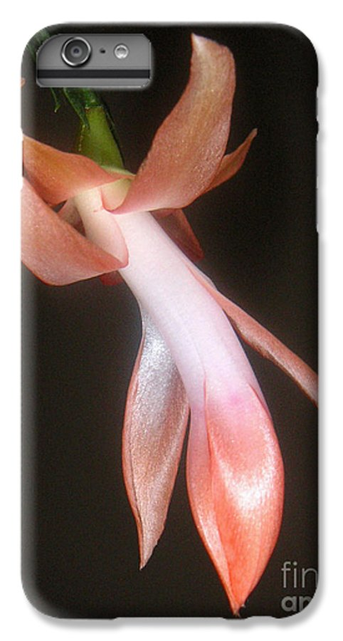 Nature IPhone 7 Plus Case featuring the photograph Holiday Cactus - In Night Light by Lucyna A M Green