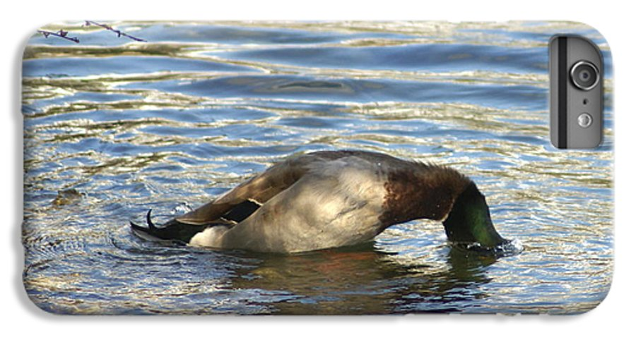 Duck IPhone 7 Plus Case featuring the photograph Just One More Peek by Debbie May