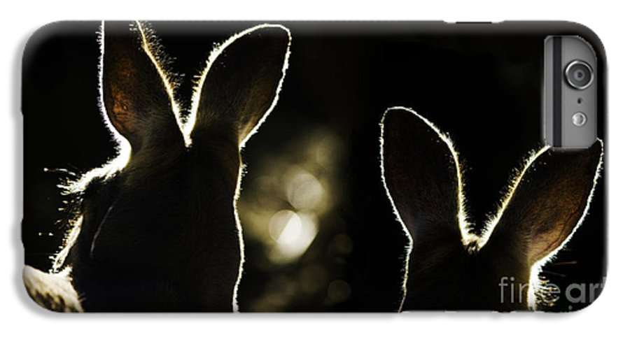 Kangaroo IPhone 7 Plus Case featuring the photograph Kangaroos Backlit by Sheila Smart Fine Art Photography