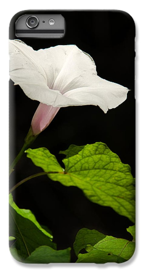 Flower IPhone 7 Plus Case featuring the photograph Light Out Of The Dark by Christopher Holmes