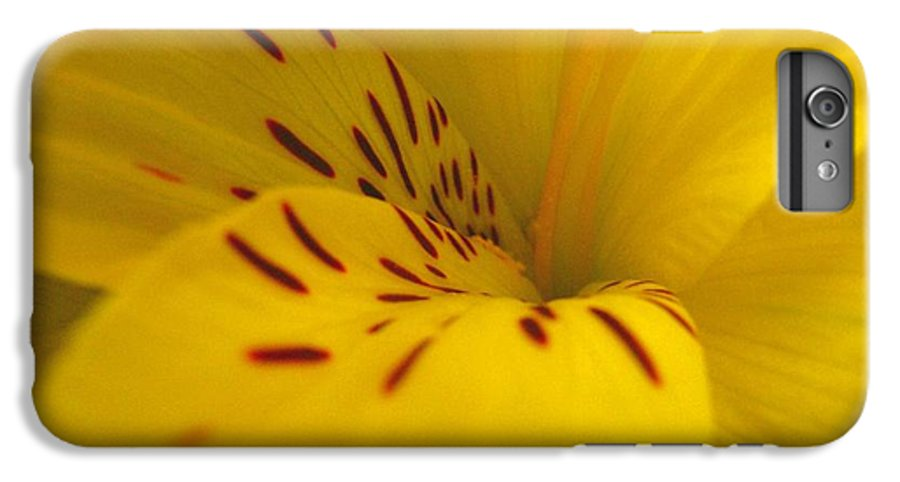 Yellow IPhone 7 Plus Case featuring the photograph Lily by Rhonda Barrett