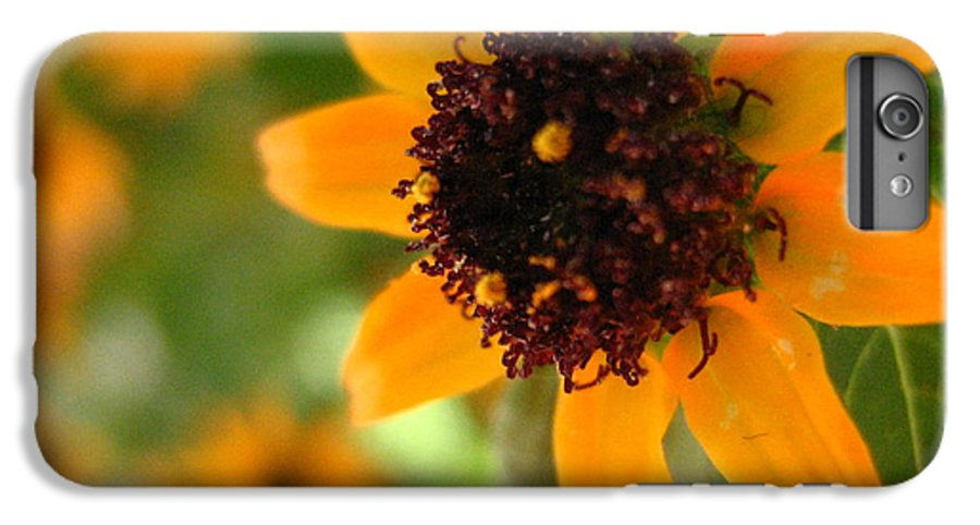 Flower IPhone 7 Plus Case featuring the photograph Mini Sunflower by Melissa Parks