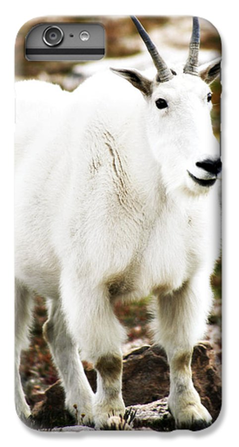 Animal IPhone 7 Plus Case featuring the photograph Mountain Goat by Marilyn Hunt