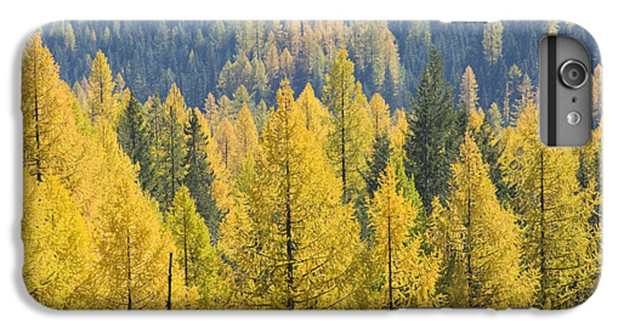 Trees IPhone 7 Plus Case featuring the photograph North Idaho Gold by Idaho Scenic Images Linda Lantzy