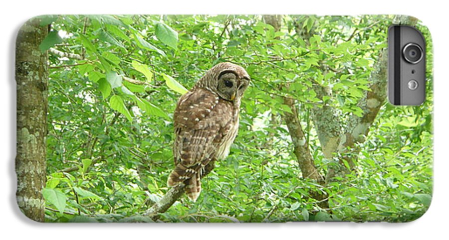 Owl IPhone 7 Plus Case featuring the photograph Owl II by Kathy Schumann