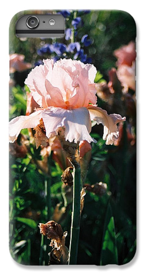Flower IPhone 7 Plus Case featuring the photograph Peach Iris by Steve Karol