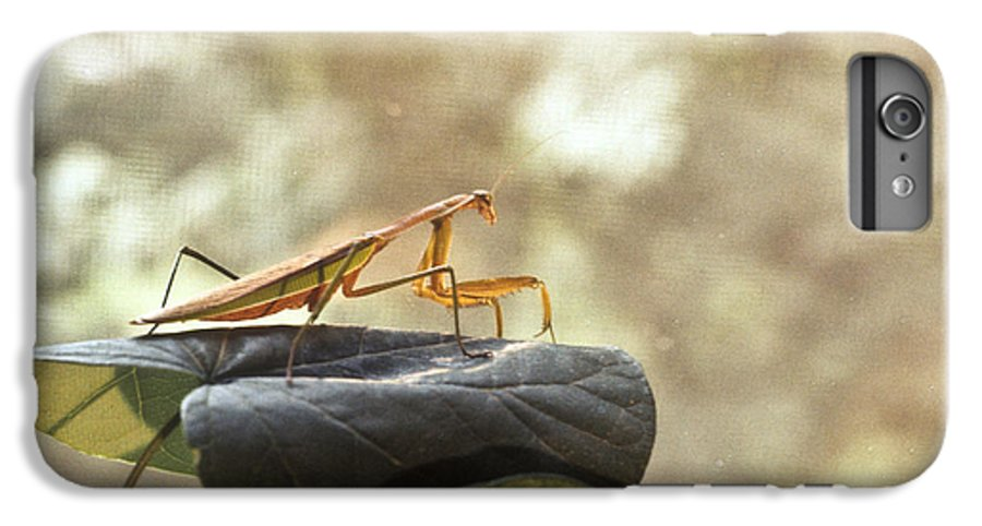 Praying IPhone 7 Plus Case featuring the photograph Pensive Mantis by Douglas Barnett