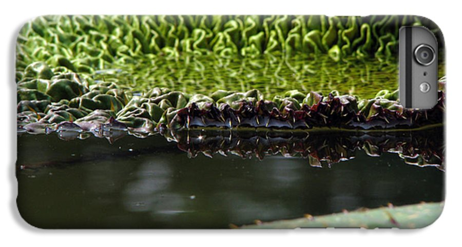 Lillypad IPhone 7 Plus Case featuring the photograph Ready To Spread by Amanda Barcon