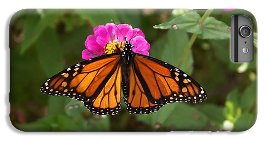 Butterfly IPhone 7 Plus Case featuring the painting Resting by Debbie May