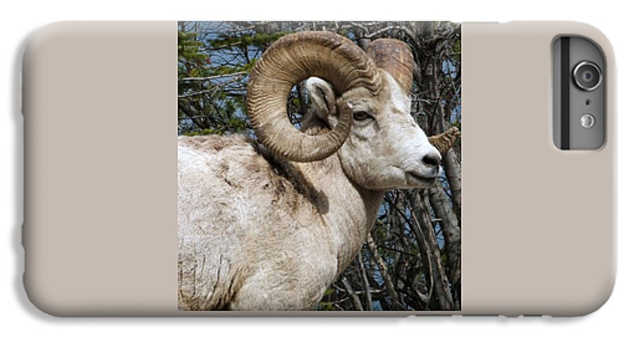 Wildlife IPhone 7 Plus Case featuring the photograph Rocky Mountain Ram by Tiffany Vest