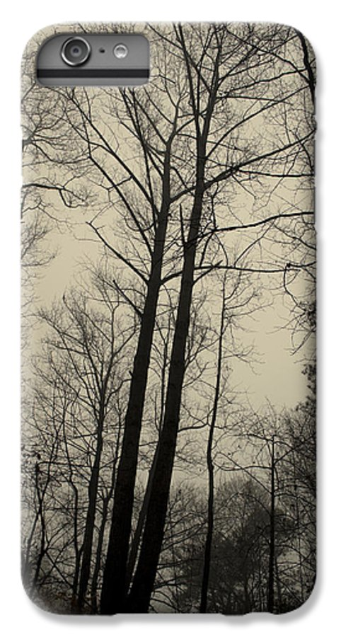 Trees IPhone 7 Plus Case featuring the photograph Standing Tall by Ayesha Lakes