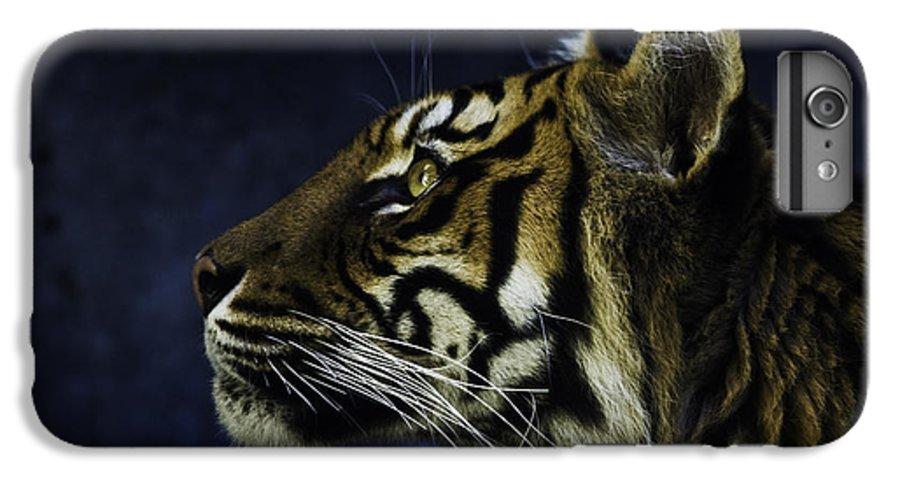 Sumatran Tiger IPhone 7 Plus Case featuring the photograph Sumatran Tiger Profile by Sheila Smart Fine Art Photography