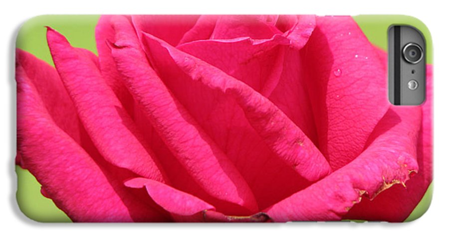 Roses IPhone 7 Plus Case featuring the photograph The Rose by Amanda Barcon