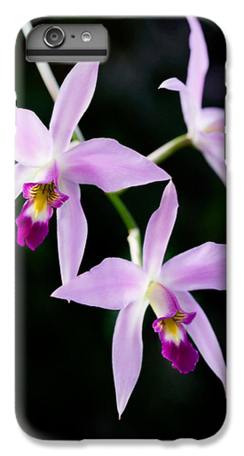 Orchid IPhone 7 Plus Case featuring the photograph Three Orchids by Marilyn Hunt