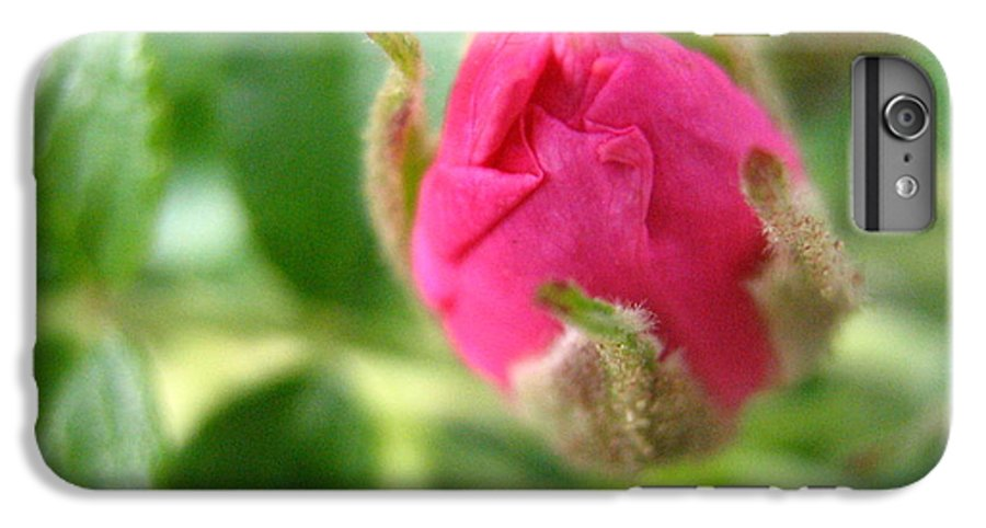 Rose IPhone 7 Plus Case featuring the photograph Wild Rose Bud by Melissa Parks