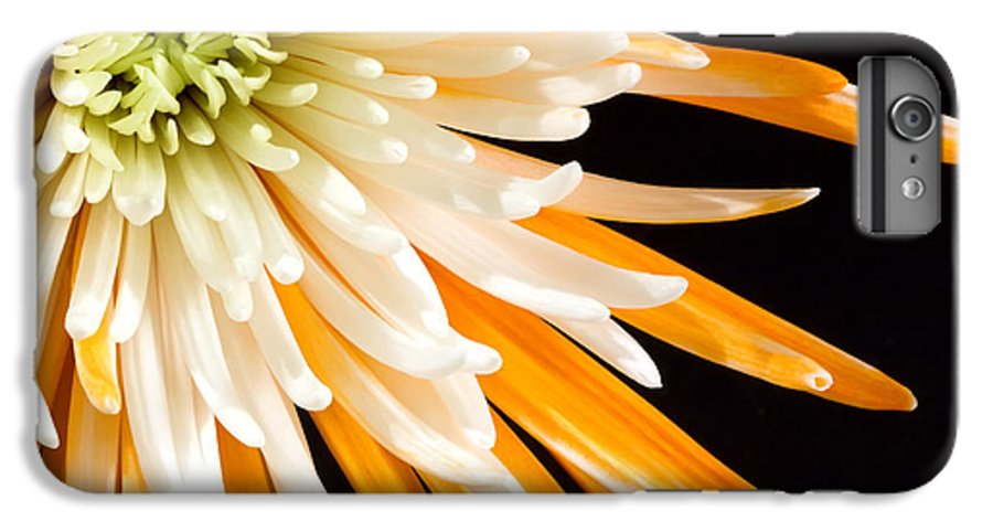 Flower IPhone 7 Plus Case featuring the photograph Yellow Flower On Black by Al Mueller