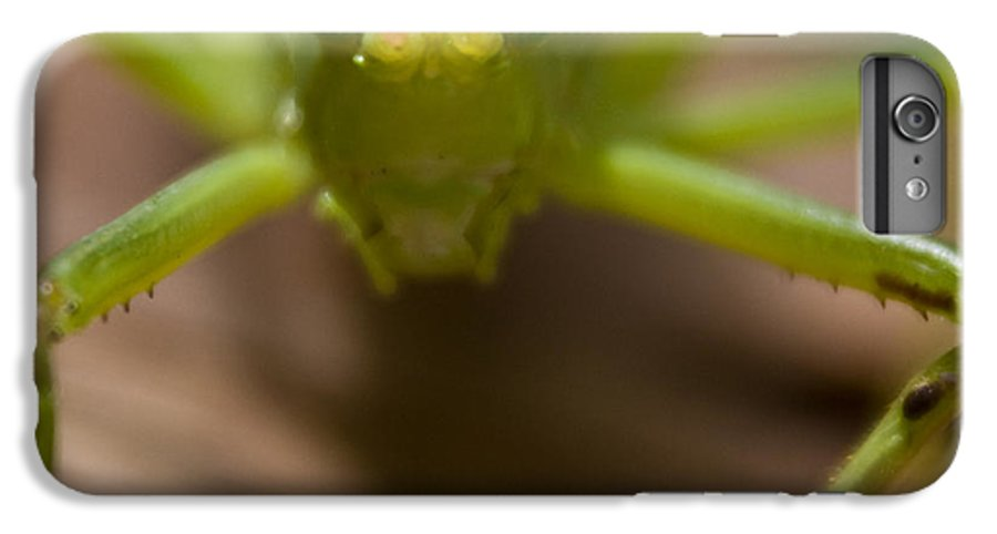 Katydid IPhone 7 Plus Case featuring the photograph You Said What by Douglas Barnett