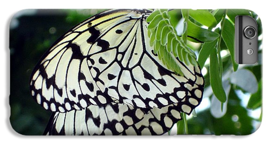 Butterfly IPhone 7 Plus Case featuring the photograph Zebra In Disguise by Shelley Jones