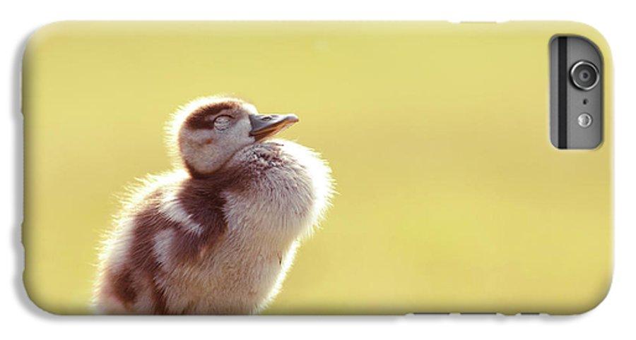 Gosling IPhone 7 Plus Case featuring the photograph Zen Bird - Gosling Enjoying The Sun Light by Roeselien Raimond