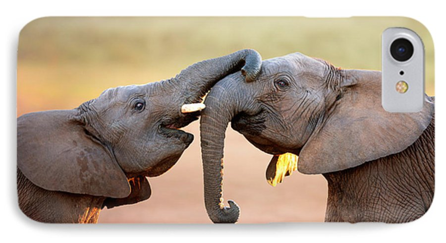 Elephant IPhone 8 Case featuring the photograph Elephants Touching Each Other by Johan Swanepoel