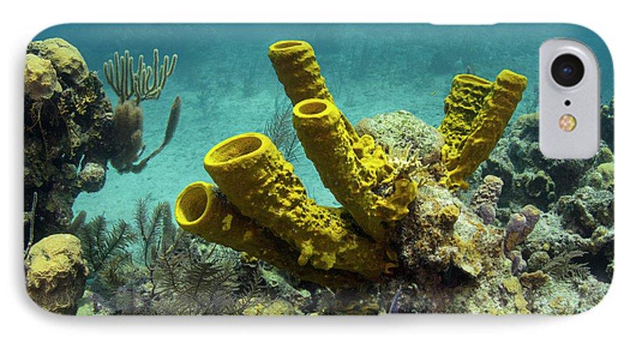 Aplysina Fistularis IPhone 8 Case featuring the photograph Yellow Tube Sponge (aplysina Fistularis by Pete Oxford