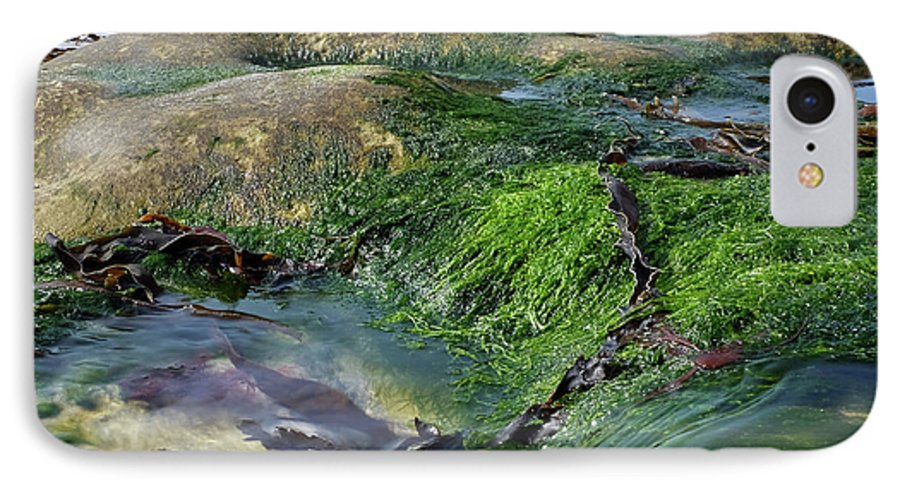 Eigg IPhone 8 Case featuring the photograph Algae On Eigg by Andrea Heins