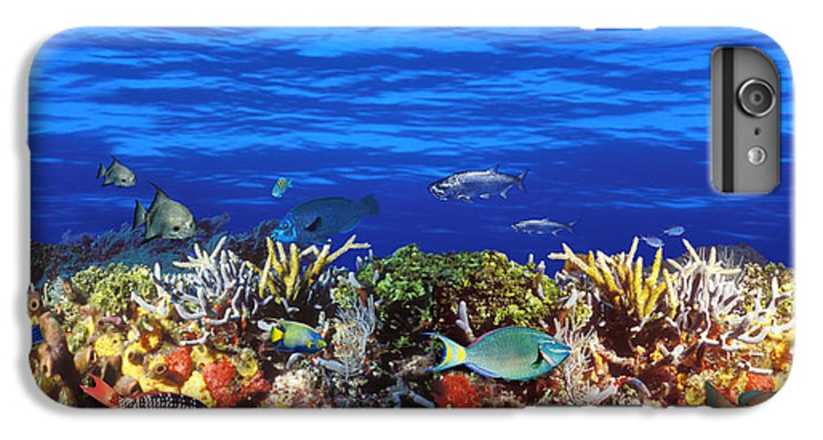 Photography IPhone 8 Plus Case featuring the photograph School Of Fish Swimming Near A Reef by Panoramic Images